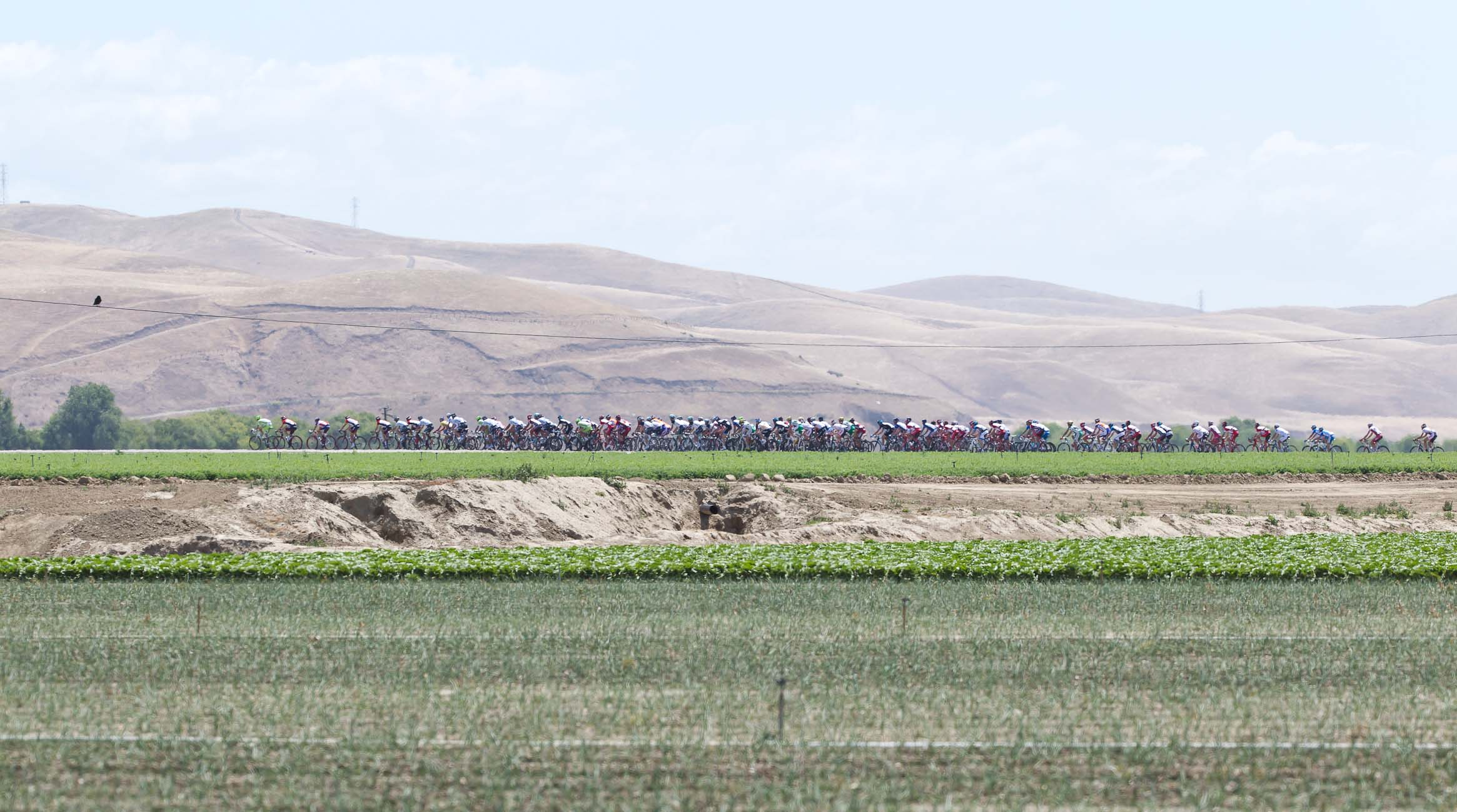 The peloton roars through agricultural california